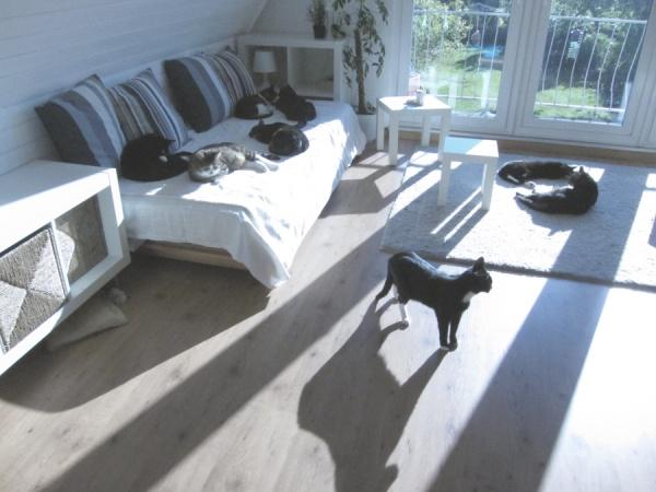 39 diskussionen rund um das thema anschaffung haltung und katzen gesellschaft seite 26. Black Bedroom Furniture Sets. Home Design Ideas