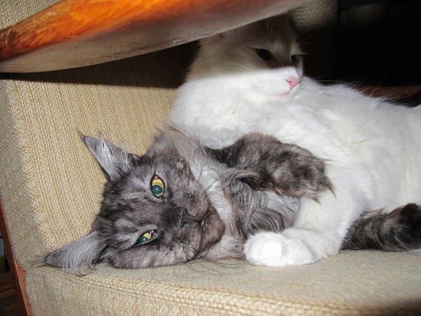 thread gegen einzelhaltung von katzen berzeugende fotos. Black Bedroom Furniture Sets. Home Design Ideas