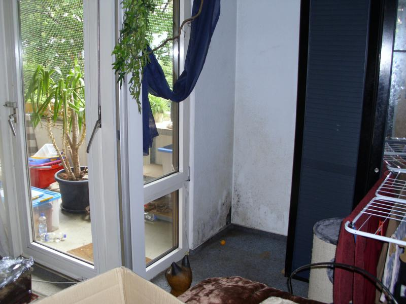 verbot von kratzbaum auf balkon seite 5 katzen forum. Black Bedroom Furniture Sets. Home Design Ideas