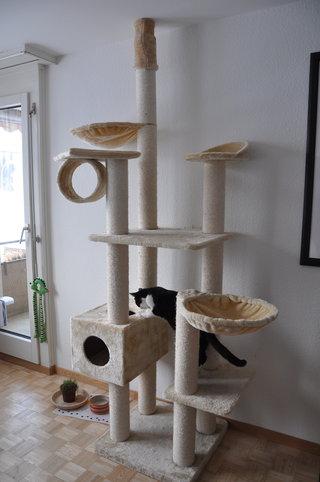 was tut man gegen kratzer an der wand hinter dem kratzbaum. Black Bedroom Furniture Sets. Home Design Ideas