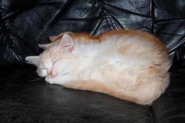 tipps und ratschl ge gesucht auch zum thema hund katze katzen forum. Black Bedroom Furniture Sets. Home Design Ideas