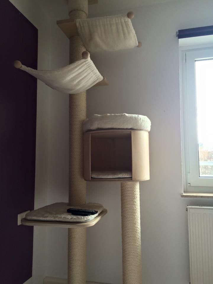 katzengl ck werbe fred seite 3 katzen forum. Black Bedroom Furniture Sets. Home Design Ideas