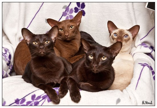 thread gegen einzelhaltung von katzen berzeugende fotos seite 30 katzen forum. Black Bedroom Furniture Sets. Home Design Ideas