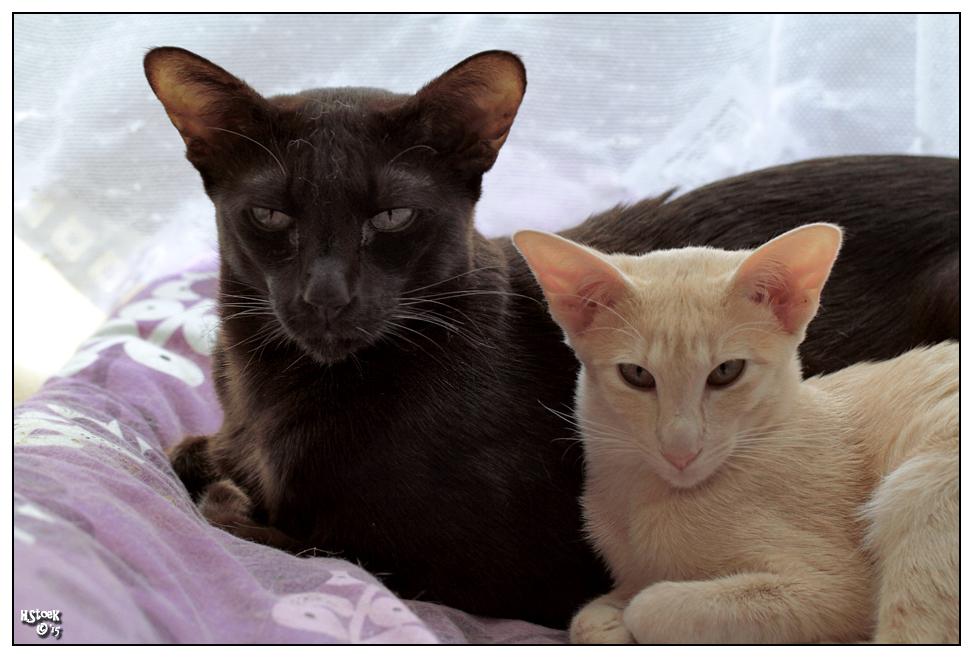 thread gegen einzelhaltung von katzen berzeugende fotos seite 236 katzen forum. Black Bedroom Furniture Sets. Home Design Ideas
