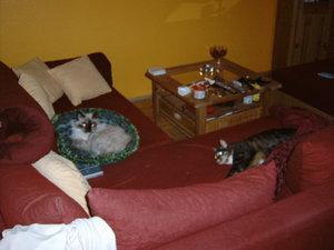 B-Couch2.JPG