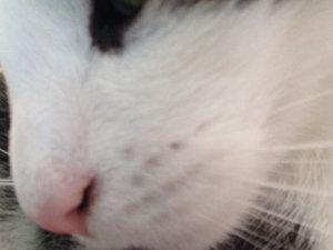 Nase der kruste nasenbluten in Schorf in