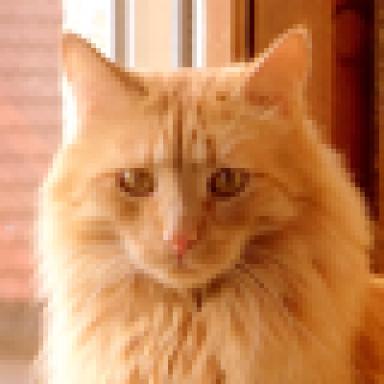 Meine Erste Katzen Kot Frage