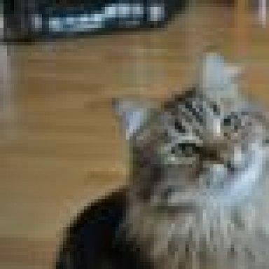 Katze kackt neben das klo