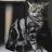 pablo_kittybar