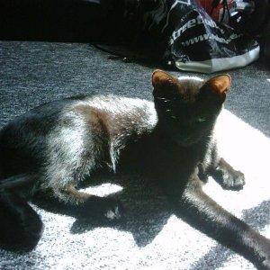 Luna mit vier Monaten. IV