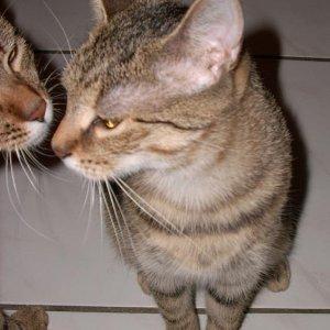 Küsschen vom Brüderchen 15.11.07