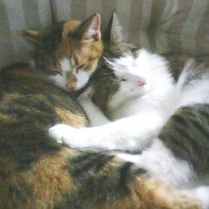 Mimi und Vicky 10. Febr. 2010 ...kann denn Liebe Suende sein?